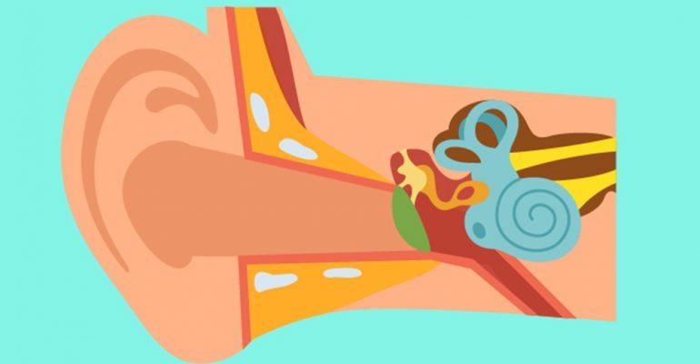 Akutno zapaljenje srednjeg uva se pojavljuje u dečijem i školskom uzrastu. Počinje obično sa kijavicom i sekrecijom iz nosa. Podrazumeva se kataralne promene sluznice nosa preko tuba i srednjeg uva. Takođe se pojavljuje i kod odraslih osoba.