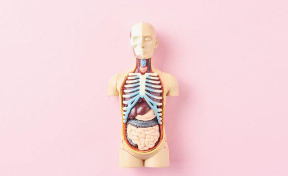 Enterografija na magnentnoj rezonanci je metoda koja omogućuje detaljan prikaz tankog creva. Ovo je metoda koja nije invazivna, ne uključuje jonizujue zračenje.